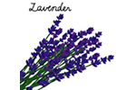 ラベンダー