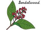 サンダルウッド